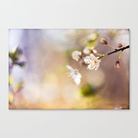 In The Morning Light Canvas Print