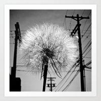 Urban dandelion Art Print