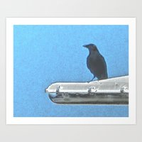 Fish Crow Art Print