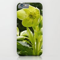 Ready For Spring iPhone 6 Slim Case