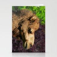MM - Camel Stationery Cards