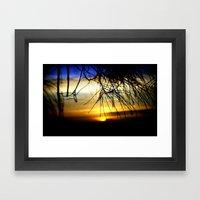 Sunset between pine Needles Framed Art Print