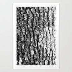 Bark Revisited  Art Print