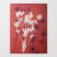 Photogram - Seaholly in Red Canvas Print