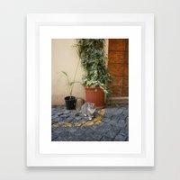roman cat Framed Art Print