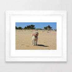 dog on the beach Framed Art Print