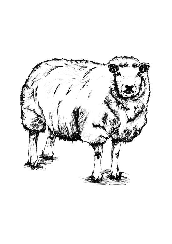 Sheep Sheep. Art Print