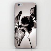 Sun Shine iPhone & iPod Skin