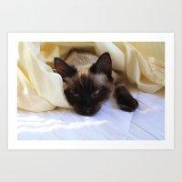 Cat Undercovers Art Print