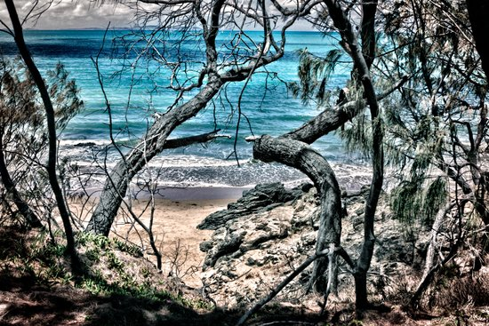 Trees by the sea Art Print