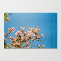Canvas Print featuring Flowers on blue by bertiehipkin