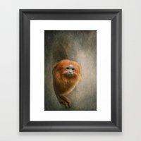 Little Golden Headed Lio… Framed Art Print