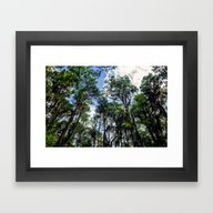 Framed Art Print featuring Swamp Trees With Moss by JMcCool