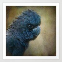 Black Cockatoo No 2 Art Print