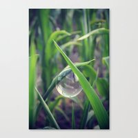 Ever So Delicate Canvas Print