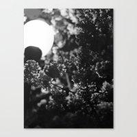 夜桜 Canvas Print