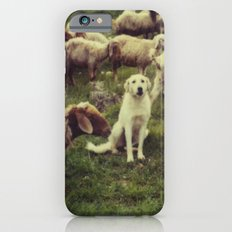 Herding dog, male, south of Israel, scaned sx-70 Polaroid iPhone 6 Slim Case