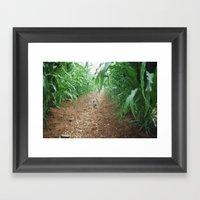 Kitten in the cornstalks Framed Art Print