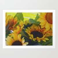 California Sunflowers Art Print