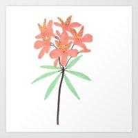 Orange Dover Flower Art Print
