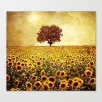 lone tree & sunflowers field Canvas Print