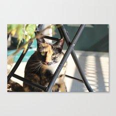 Calliope on the Porch Canvas Print