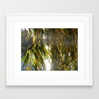 Willow in Morninglight Framed Art Print