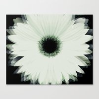 Into The Flower Canvas Print