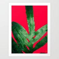 Green Fern On Bright Red Art Print