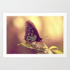 Butterfly 02 Art Print