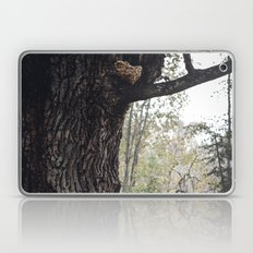 Oak tree Laptop & iPad Skin