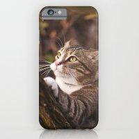 Chrapcio the Fierce iPhone 6 Slim Case