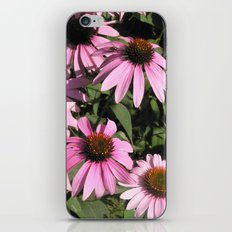 Coneflowers iPhone & iPod Skin
