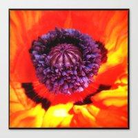 Orange Poppy Flower  Canvas Print