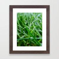 Morning Dew Framed Art Print