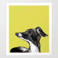 Greyhound Art Print