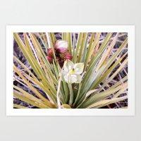 Yucca Flowers in Bloom Art Print