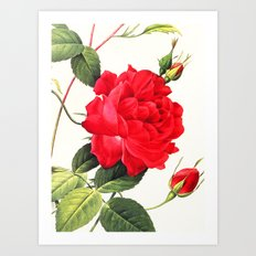 IX. Vintage Flowers Botanical Print by Pierre-Joseph Redouté - Red Rose Art Print