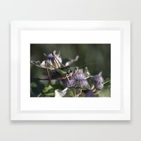 Grasshopper 4110 Framed Art Print