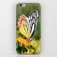 Butterfly (2) iPhone & iPod Skin