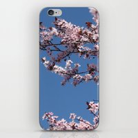 Sakura Blossoms iPhone & iPod Skin
