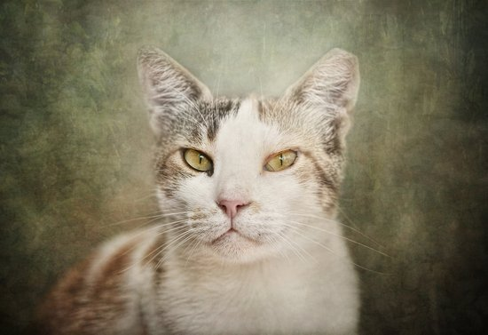 The Feral Cat Art Print