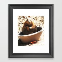 A Bowl Of Groundhog And … Framed Art Print