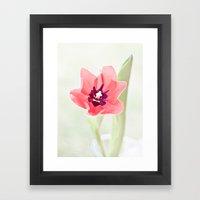 Pretty Pink Tulip Framed Art Print