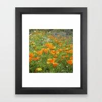 california poppy VIII Framed Art Print