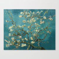 Amendoeira em flor Canvas Print
