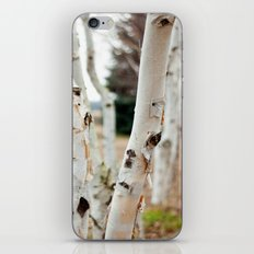 Line of Birches iPhone & iPod Skin