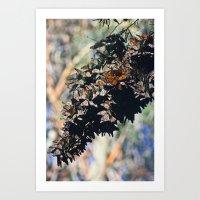 Butterfly Branch Art Print
