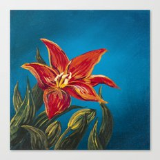 Morning Star Lily Canvas Print