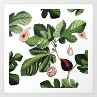 Figs White Art Print